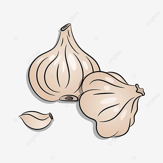 vegetable garlic clipart