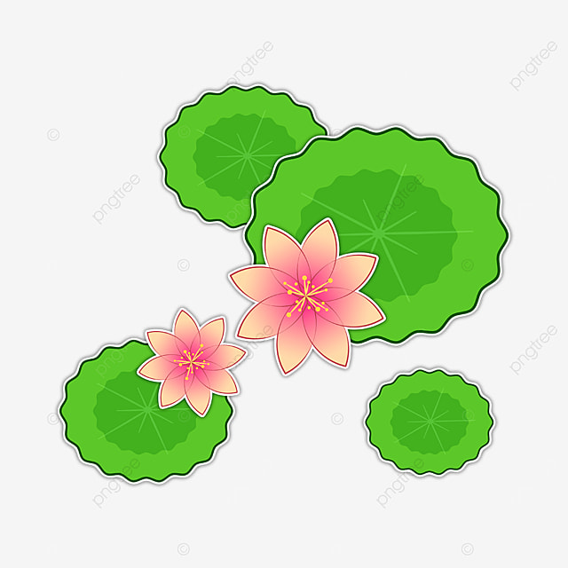 green leaf water lily clip art