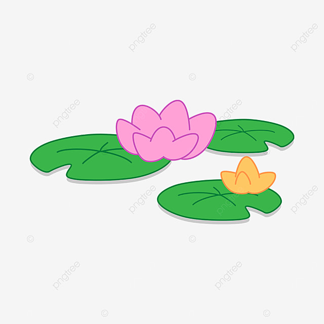 pink yellow water lily clipart