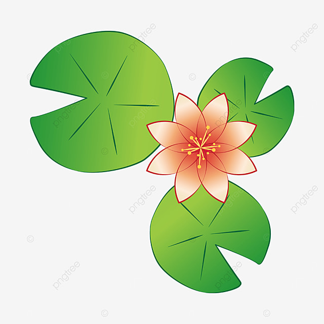 three leaf water lily clipart
