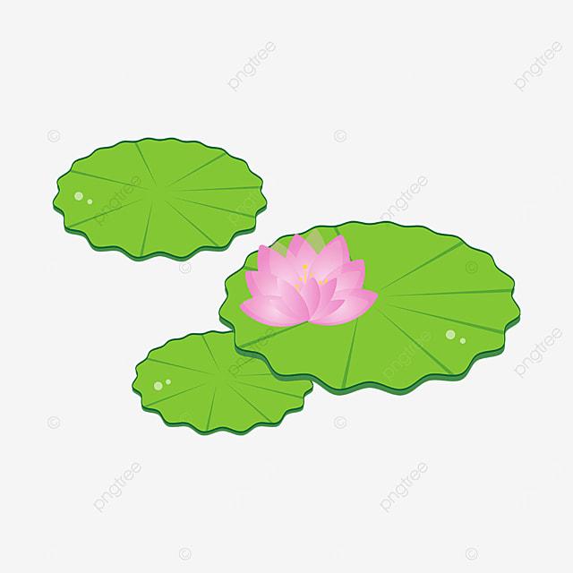 wavy edge leaf water lily clip art