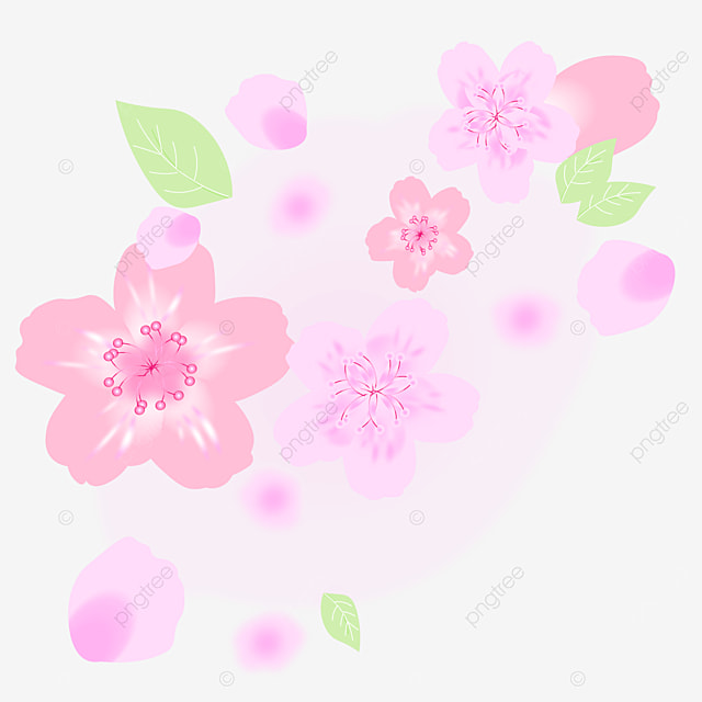 Cherry Blossom Spring Flower Clipart, Spring Flowers Clipart, Cherry Blossom, Cherry Blossom Clipart PNG and Vector