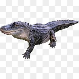 pngtree alligator animal body diagram png clipart_1940429 animal body diagram trusted wiring diagrams