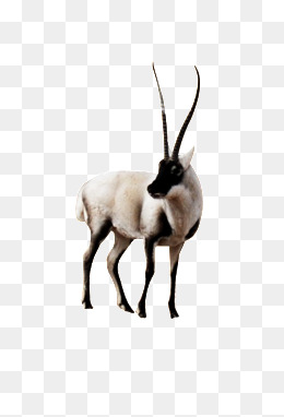 Antelope Png Images Vectors And Psd Files Free