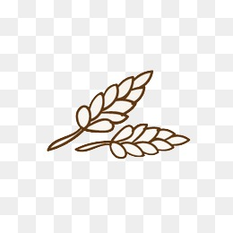 Wheat Line Drawing Png Images Vectors And Psd Files Free