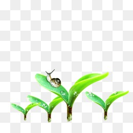 Seed Germination Process Cartoon Hand Seed Png Image