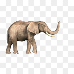 African Elephant PNG Images | Vectors and PSD Files | Free ...
