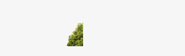 A Cluster Of Small Bushes, Underbrush, Decoration, Tree PNG Image