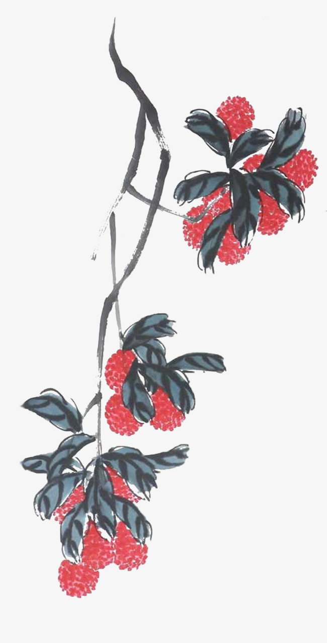 A lily on a string of lychee a string of on vine litchi png image a lily on a string of lychee a string of on vine litchi izmirmasajfo