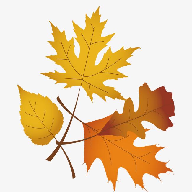 um monte de folhas cartoon maple leaf gourmet png e vetor