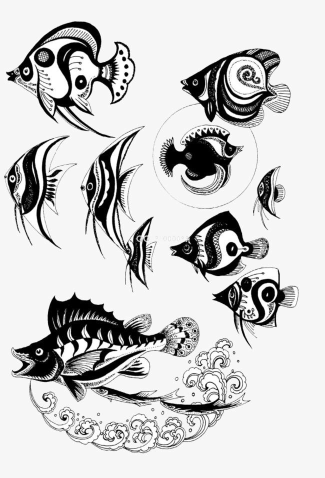 Una Gran Variedad De Peces Pescado Diversidad Blanco Y Negro Imagen