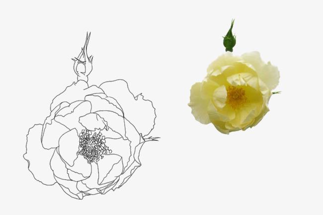 Hibiscus De Dessin Anime Les Fleurs Simple Dessin Image Png Pour Le