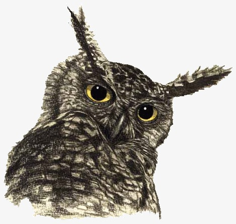 Image of: Png Animal Owl Animal Clipart Owl Clipart Nocturnal Animals Png Image And Clipart Pngtree Animal Owl Animal Clipart Owl Clipart Nocturnal Animals Png Image