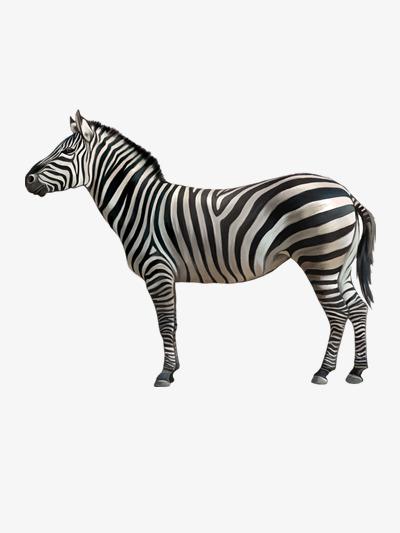 Zèbre Mignon Dessin Animal Image Png Pour Le Téléchargement Libre