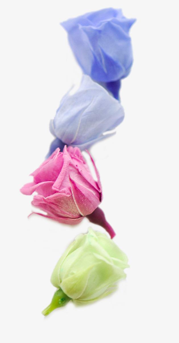 Belle Image Rose Bleu belle couleur rose bleu rose les fleurs image png pour le