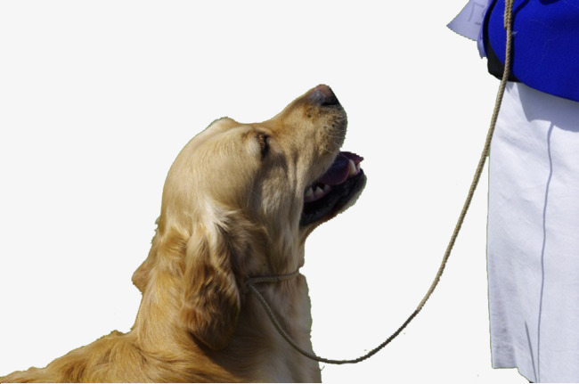 Beautiful Dog Dog Clipart Cute Dog Beauty Holding Dog Png Image