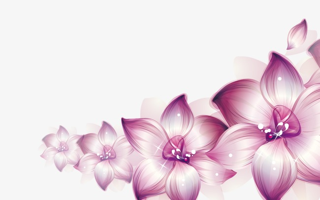Beautiful Flowers, Flowers, Flowers, Beautiful Vector PNG
