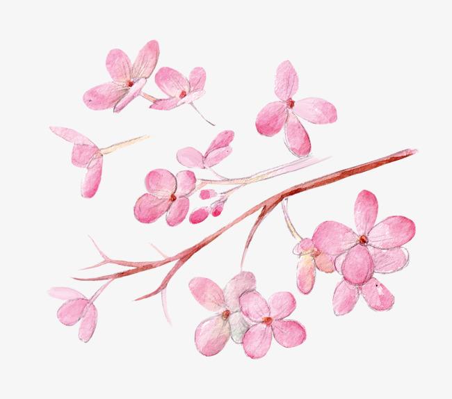 Hermosas Y Frescas Flores Rosas Sen Departamento De Dibujo Hermosa