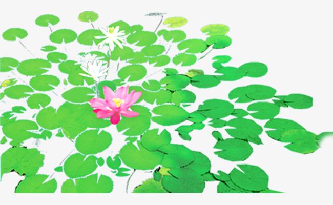Hermosa Flor De Loto Verde Pintado A Mano Lotus Imagen Png Para