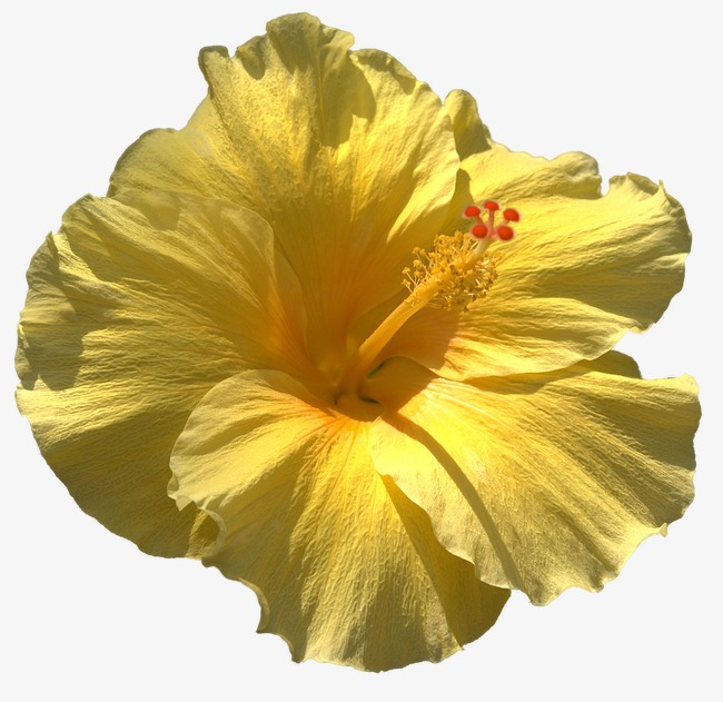 Big yellow yellow flower fancy flowers flowers png image and big yellow yellow flower fancy flowers flowers png image and clipart mightylinksfo