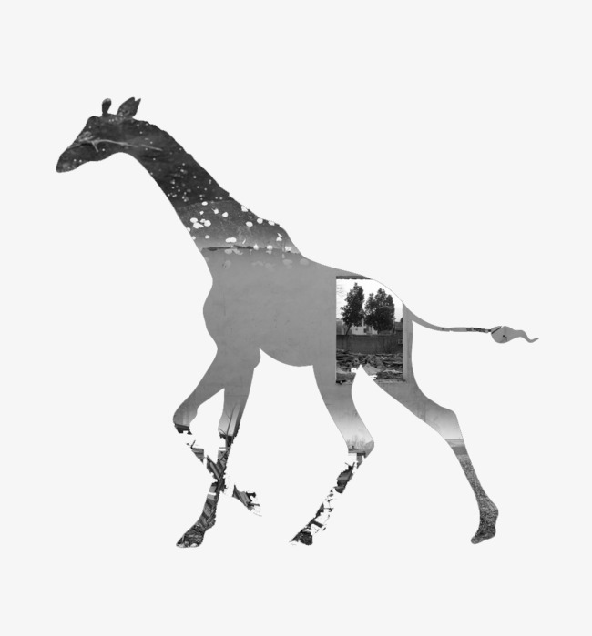 Black And White Landscape Giraffe Landscape Clipart Giraffe