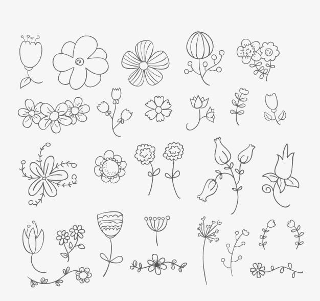 Le Matériau De Plante En Noir Et Blanc Ligne De Dessin Fleur De