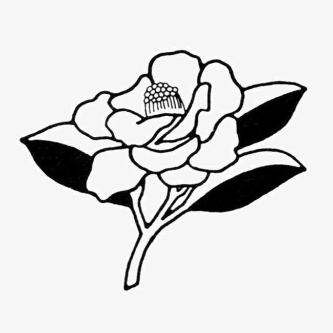 Dibujo De Flores Blanco Y Negro Blanco Y Negro Sketch Rose Imagen