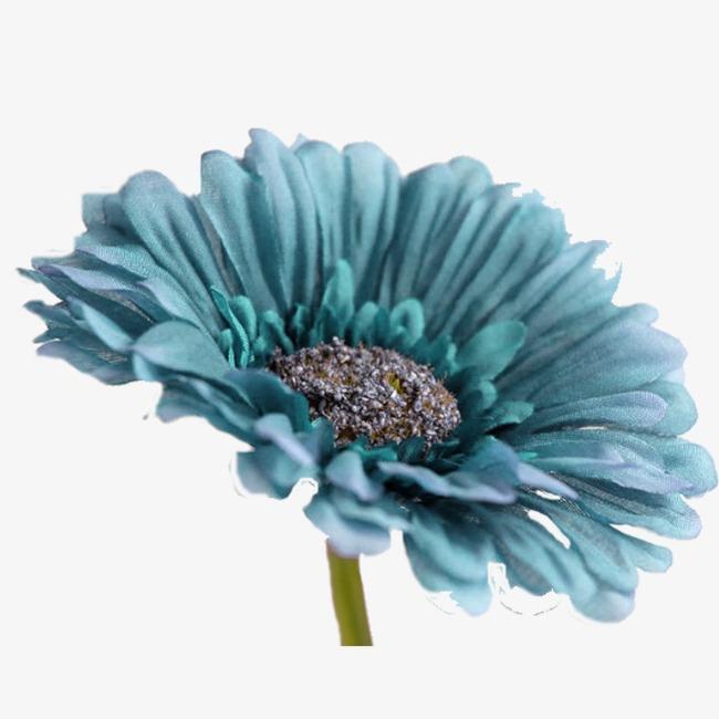 Flor Azul Flores Flor Flores Silvestres Imagen Png Para Descarga