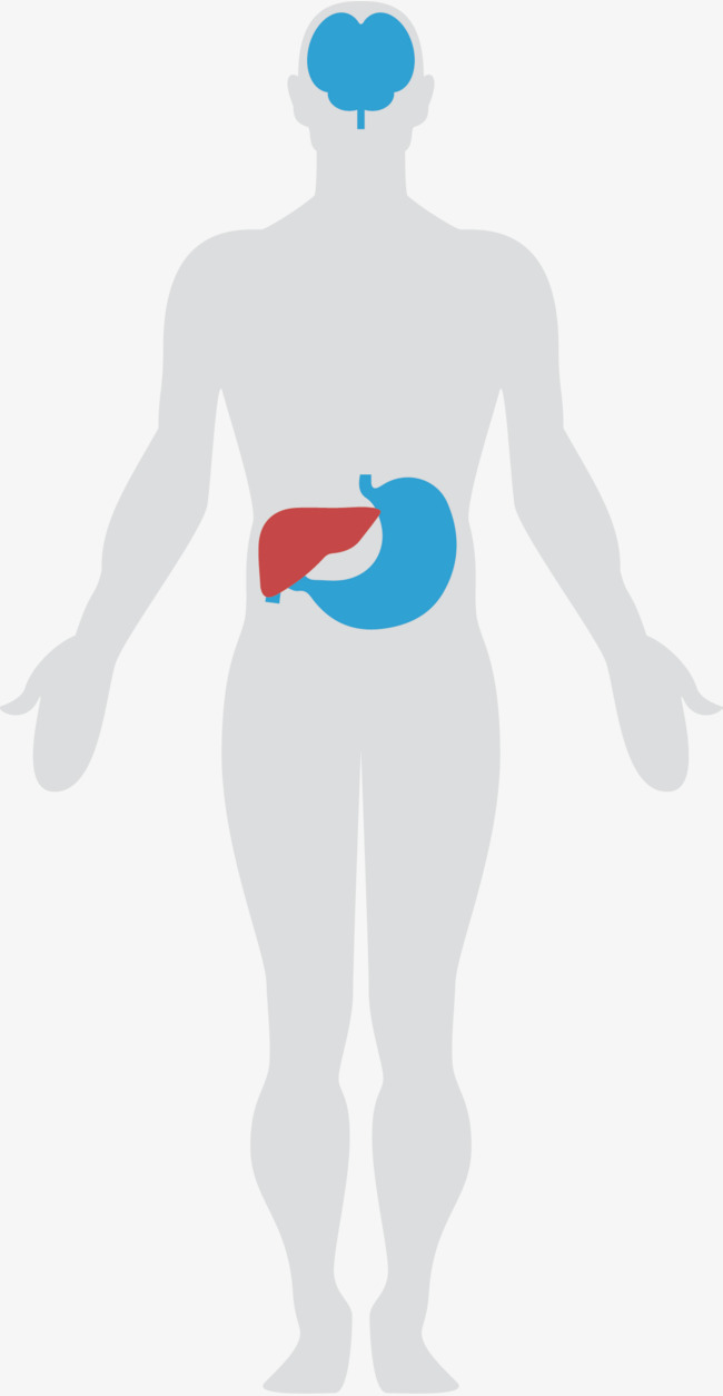 Body Chart Body Vector Chart Vector Human Body Png And Vector For