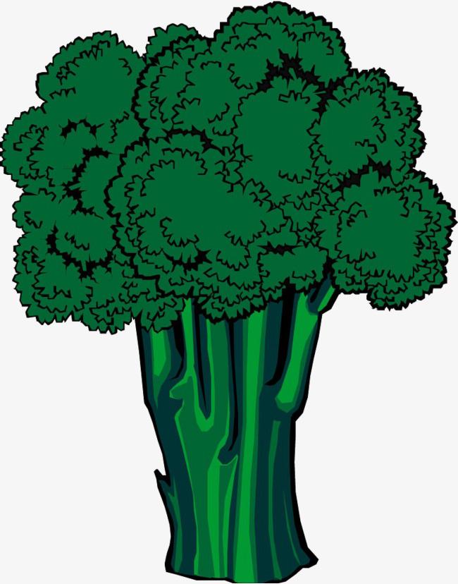 desenho de brócolis brócolis verde plantas png imagem para download
