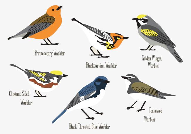 le dessin des esp u00e8ces d oiseaux de mots anglais couleur