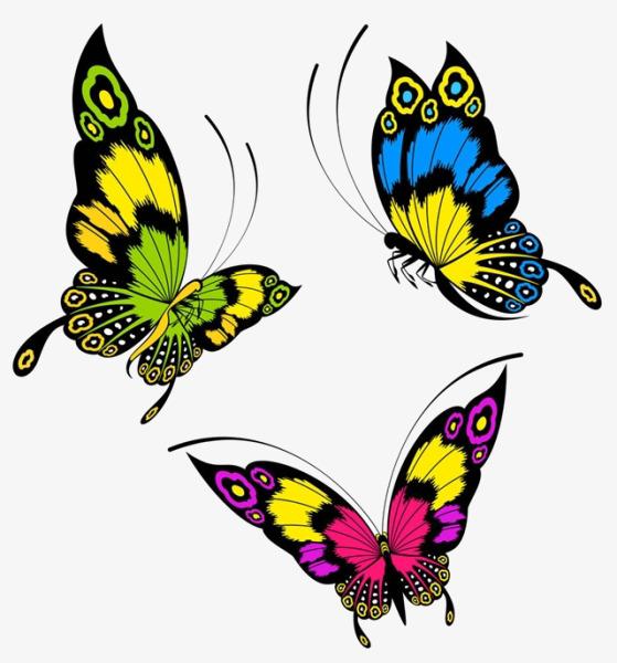 dessin de papillons dessin papillons couleur image png pour le t u00e9l u00e9chargement libre