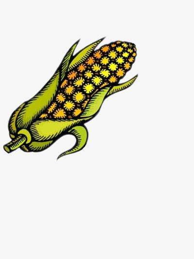 Kartun Jagung Daun Sayur Sayuran Biji Bijian Imej Png Dan Clipart