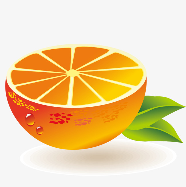 dessin de fruits orange dessin fruits feuilles png et