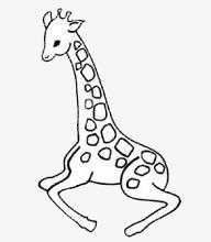 Dessin De La Girafe Dessin Girafe Noir Et Blanc Image Png Pour Le