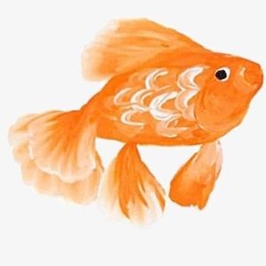 Kartun Ikan Mas Kartun Tangan Dicat Ikan Mas Ikan Kecil Ikan Kecil
