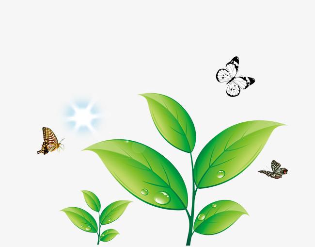 dessin de feuilles vertes de papillon vert de feuilles le