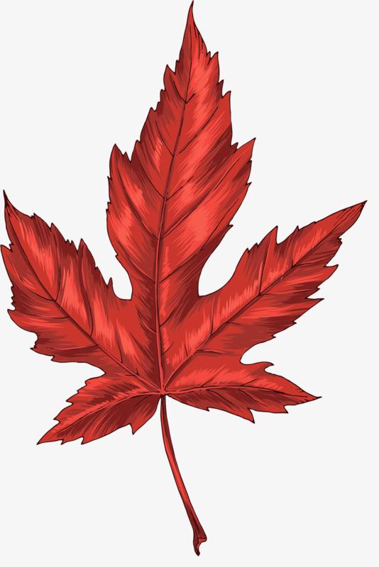 dessin de feuilles dessin les feuilles rouge image png
