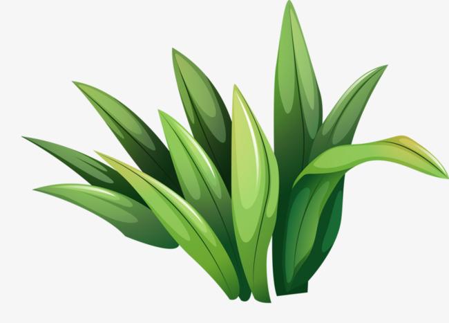 dessin de la plante d u00e9corative vert feuilles animation