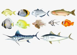 Kartun Tangan Dicat Pelbagai Ikan Kartun Tangan Dilukis Kartun Buah