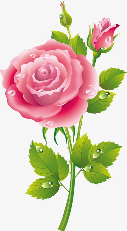 Cartoon Painted Roses, Cartoon Clipart, Small Fresh, Pink PNG Transparent Image and Clipart for ...