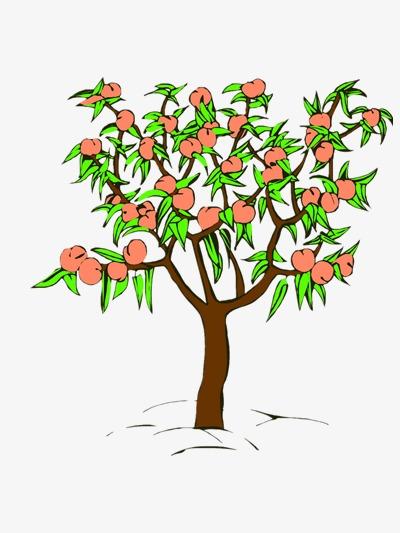 dessin de p u00eacher p u00eaches des plantes les arbres fruitiers