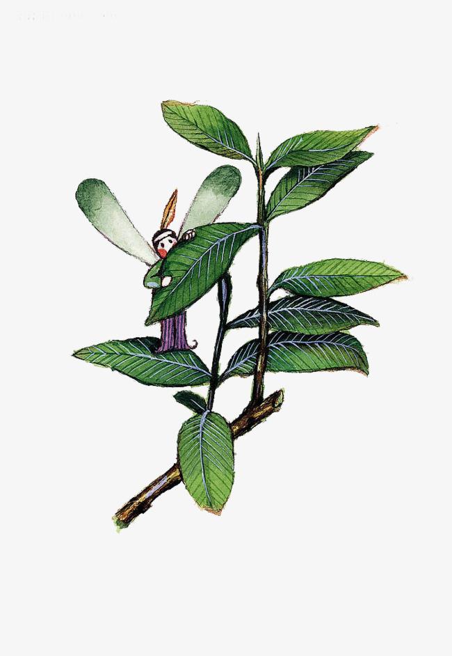 le dessin des elfes aquarelle libellule aquarelle des