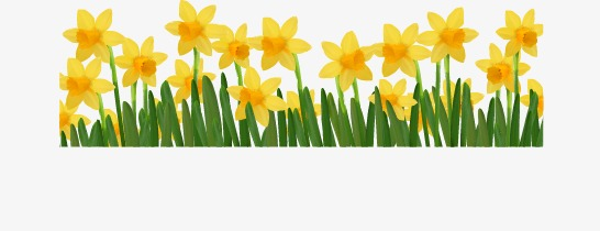 Cartoon Spring Flowers Vector Png And