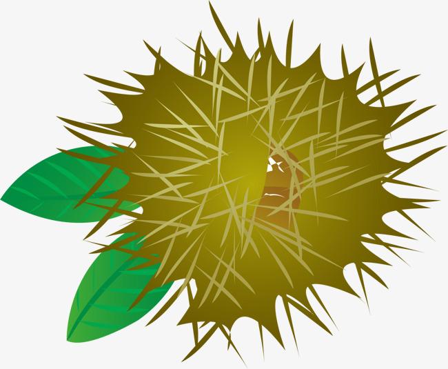 Vector Kastanien Elemente Ziehen Material Ohne Wirkung Material