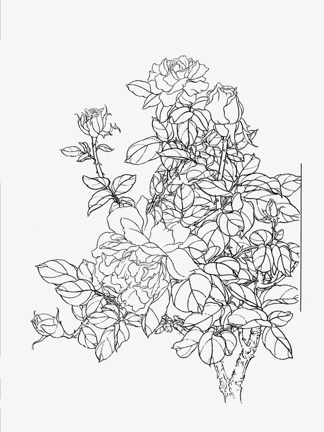 Chinese Rose Chinese Clipart Rose Clipart Png Image And Clipart