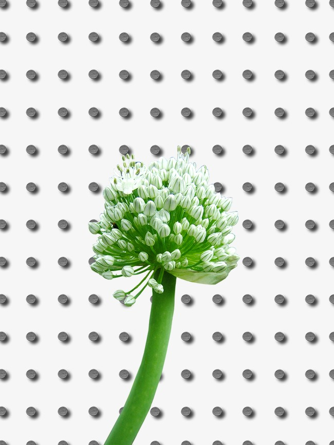 Chopped green onion vegetables white flowers png and psd file for chopped green onion vegetables white flowers png and psd mightylinksfo