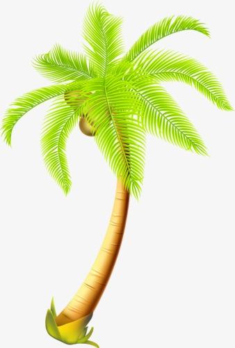 Noix de coco summer summer palmiers image png pour le t l chargement libre - Palmier clipart ...