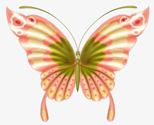 Dessin De Couleur De Fleur Papillon Dessin De Peints à La Main