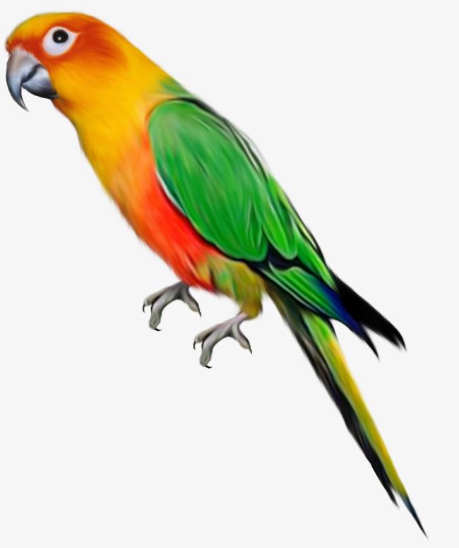 Kreatif Kartun Burung Beo Bahan Percuma Untuk Tarik Kreatif Kartun